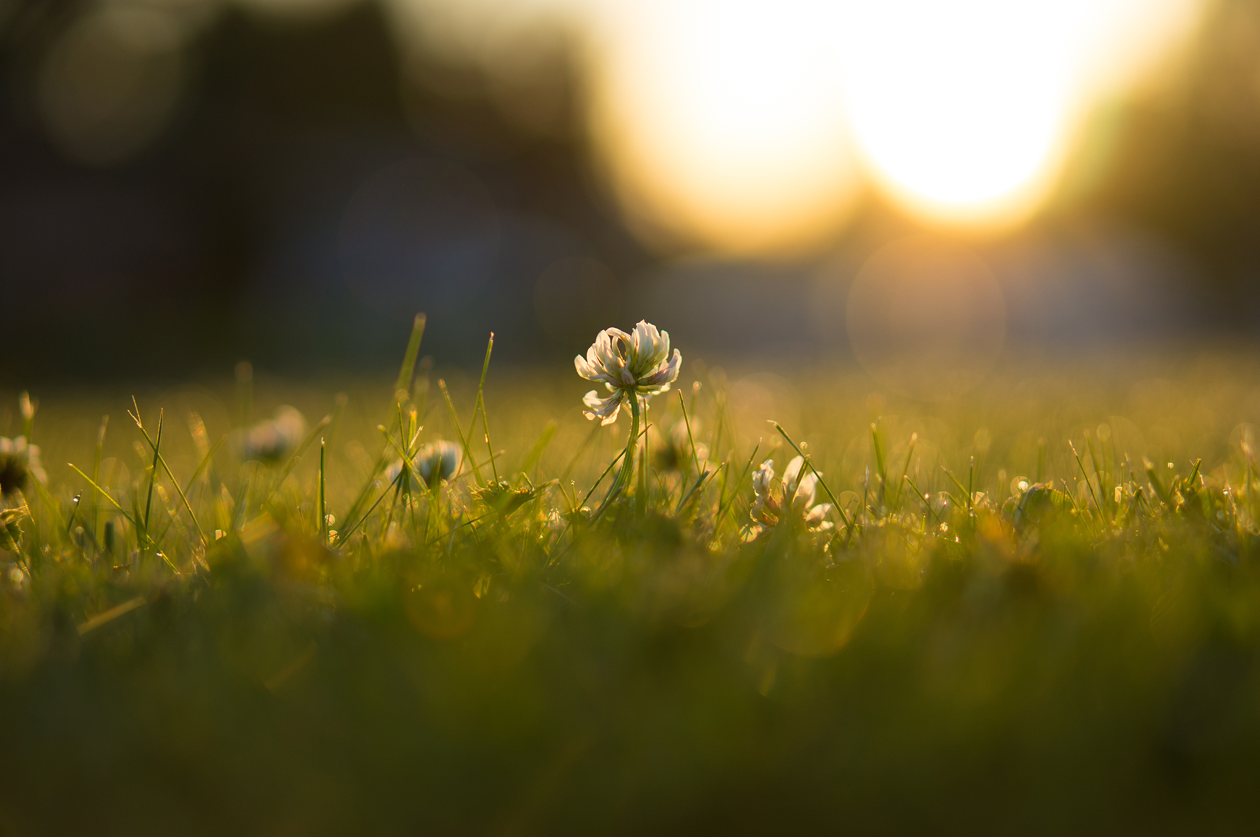 clover_sunrise_small.jpg